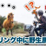 日本最西端の島 与那国島で原付ツーリングしたら野生馬に遭遇してしまったバイク女子